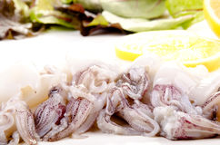 Squid before preparing as food Stock Photos