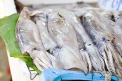 Squid, raw  squid Royalty Free Stock Photos