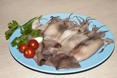 Squid ready to cook Stock Images