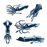 Squid sea animal icon set for seafood design Stock Photography