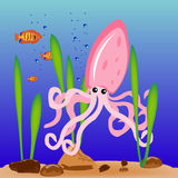 Squid on sea day Stock Photos