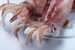 Squid. Shellfish used in Italian cuisine Mediterranean dishes with pasta, rice or second dishes Stock Photography