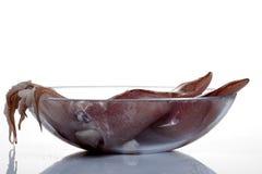 Squid Stock Photography
