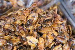 Squid. Sweet and spicy dried squid on the market  Thai style crispy fried squid Royalty Free Stock Images