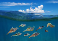 Squid underwater with cloud above sea surface Stock Image