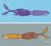 Squid vector Royalty Free Stock Photos