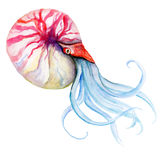 Squid Watercolor Vector. Illustration of a sea creature made in vector. Watercolor vector squid. Ocean and tropical art graphic royalty free illustration