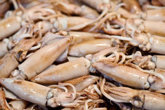 Squids Royalty Free Stock Images