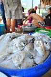 Squids caught by local fishermen are for sale on the Con Dao island of Vietnam Stock Image