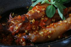 Squids with Lampung Chili Sauce Royalty Free Stock Photography