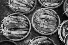 Trays of squids. Squids at a local market at Phan Rang, Vietnam Stock Photography