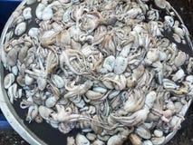 Squids raw fresh seafood in market thai Stock Photos