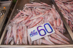 Squids for sale at fresh food market in Samut Sakhon. Royalty Free Stock Photo