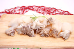 Squids Stock Photo