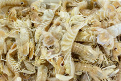 Squilla mantis in a seafood market Stock Images