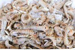 Squilla modliszki garnele na kontuarze przy grek ryba robią zakupy Obraz Stock