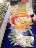 Squillabönsyrsa, bönsyrsaräkor, Stomatopods, friskhet arkivbilder