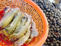 Squillabönsyrsa, bönsyrsaräkor, Stomatopods, friskhet arkivfoton