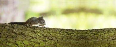 Squiller behandla som ett barn websitebanret Royaltyfria Foton