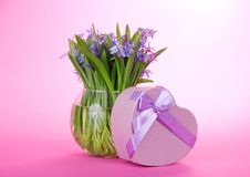 Squills in vase and gift with a ribbon Royalty Free Stock Images
