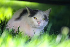 The squint-eyed cat walking outdoor Stock Photo