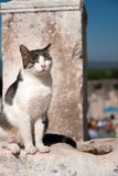 Squinting cat Stock Photography
