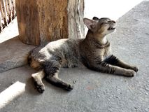 Squinting Tabby cat Royalty Free Stock Photography