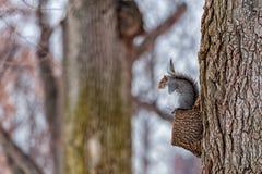 Squirell в парке холодная зима дня Стоковое Изображение