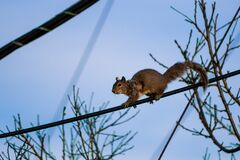 Squirell on a Power Line Stock Photo