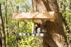 Squirrel и фидер на городе Forest Park, подавая дикие животные на городе Москвы Стоковая Фотография