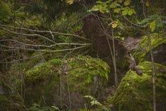 Squirrel сидеть на утесе в парке Monrepos осени Стоковое Изображение
