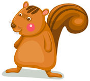 Squirrel. Illustration of isolated cartoon squirrel on white background Stock Image