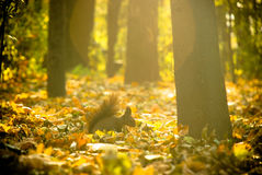 Squirrel. An little squirrel photographyed in parc, at the sunset Stock Photography