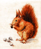 Squirrel. Eating hazel nuts. Colored pencil drawing, sketch Royalty Free Stock Image