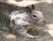 Free Squirrel Stock Images - 31252774