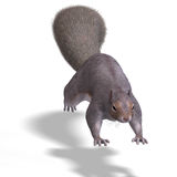 Squirrel 3D Render Royalty Free Stock Image