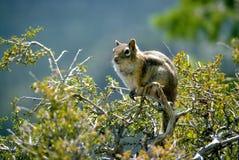 Squirrel. A friendly squirrel royalty free stock photos