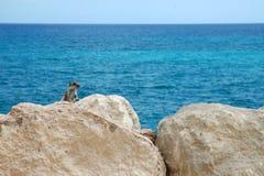 Squirrel. Rock climber near the ocean - in spain Royalty Free Stock Photos