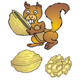 Squirrel Stock Image