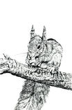 The Squirrel Stock Images