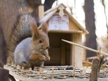 Squirrel 6 Stock Images
