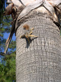 Squirrel. And palm tree stock photography