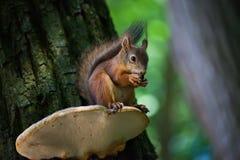 Free Squirrel Stock Photos - 9958483