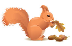 Squirrel with acorns. Contains transparent objects. EPS10 Stock Image