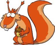 Squirrel with acorns Stock Image