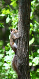 Squirrel in Alabama Forest Stock Image