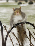 Squirrel Alert Three Stock Photography