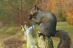 Free Squirrel And Bird On A Fence Royalty Free Stock Photo - 12947075