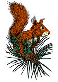 Squirrel 2 Royalty Free Stock Photos