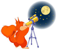 Squirrel astronomer Stock Photos